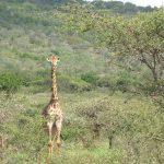 5-Day Tanzania Safaris