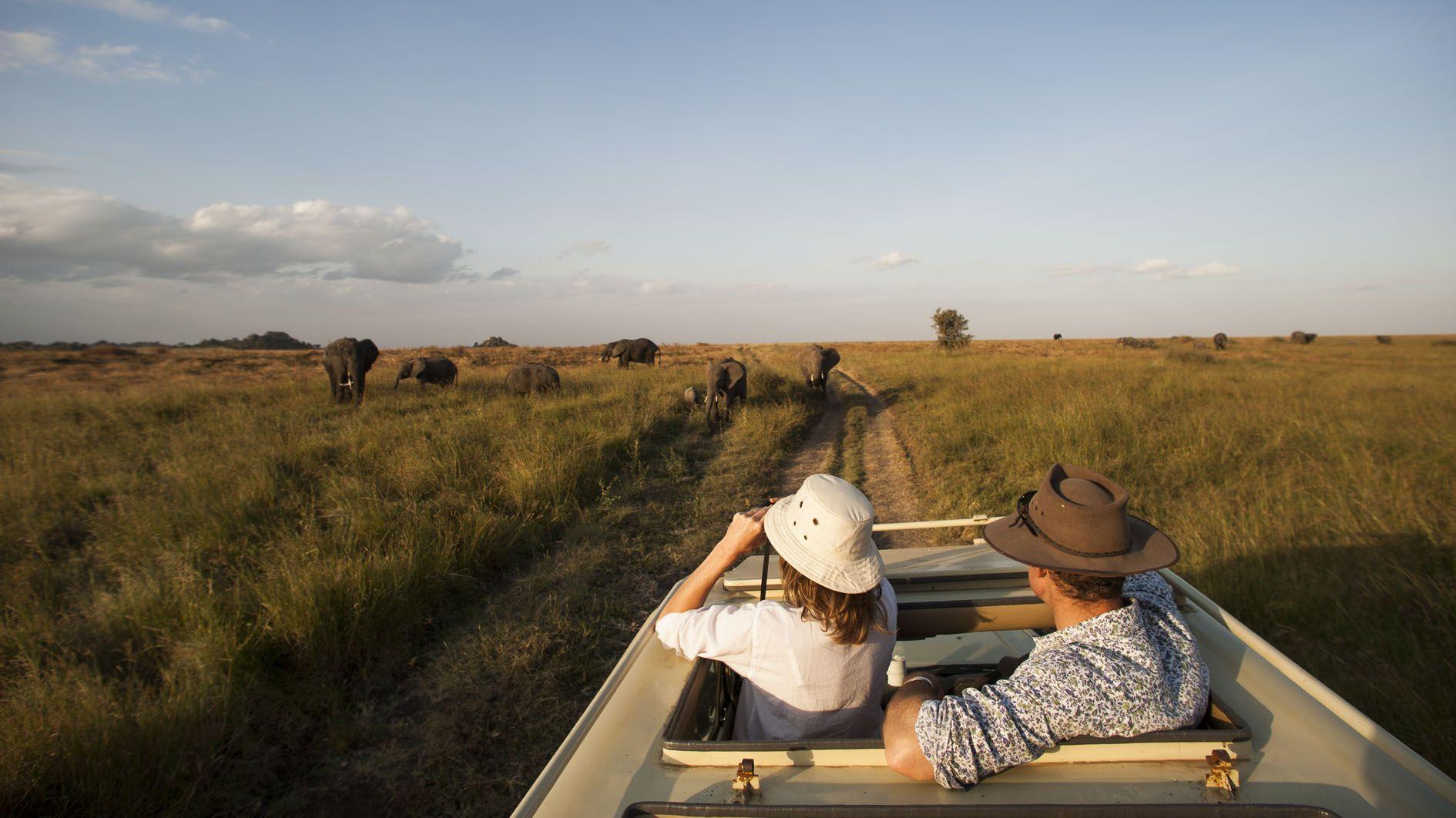 Tanzania game drive