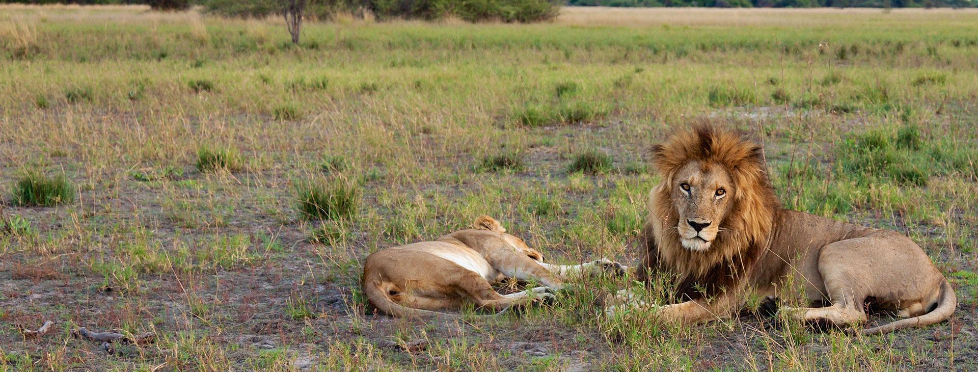Muslim Honeymoon Safari in tanzania