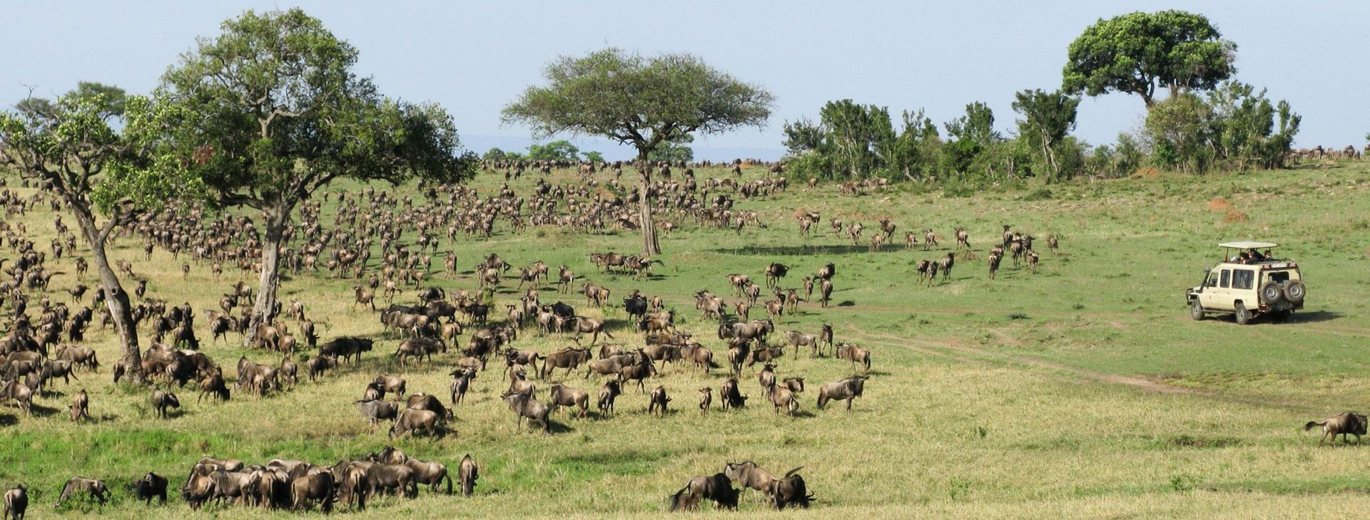 African Halal Camping Safari
