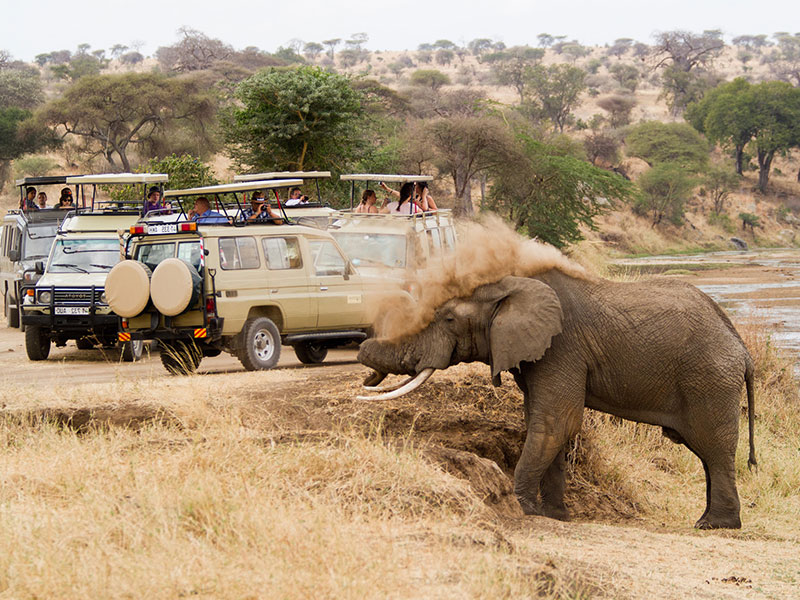 Best of Tanzania Halal Safari