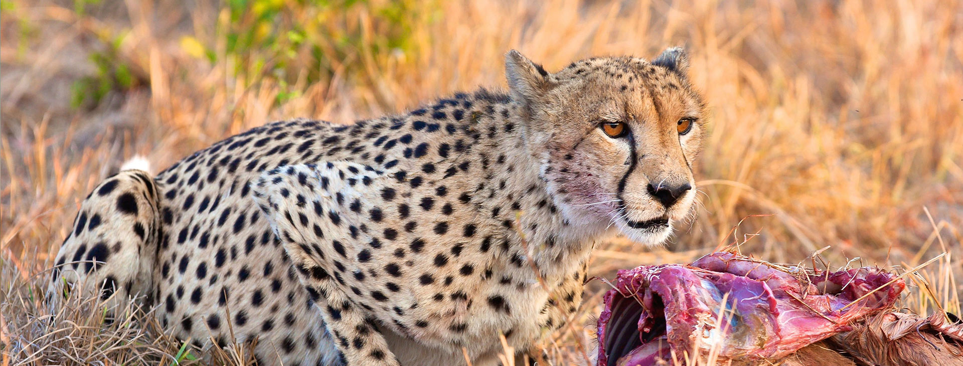 Halal Friendly Safari