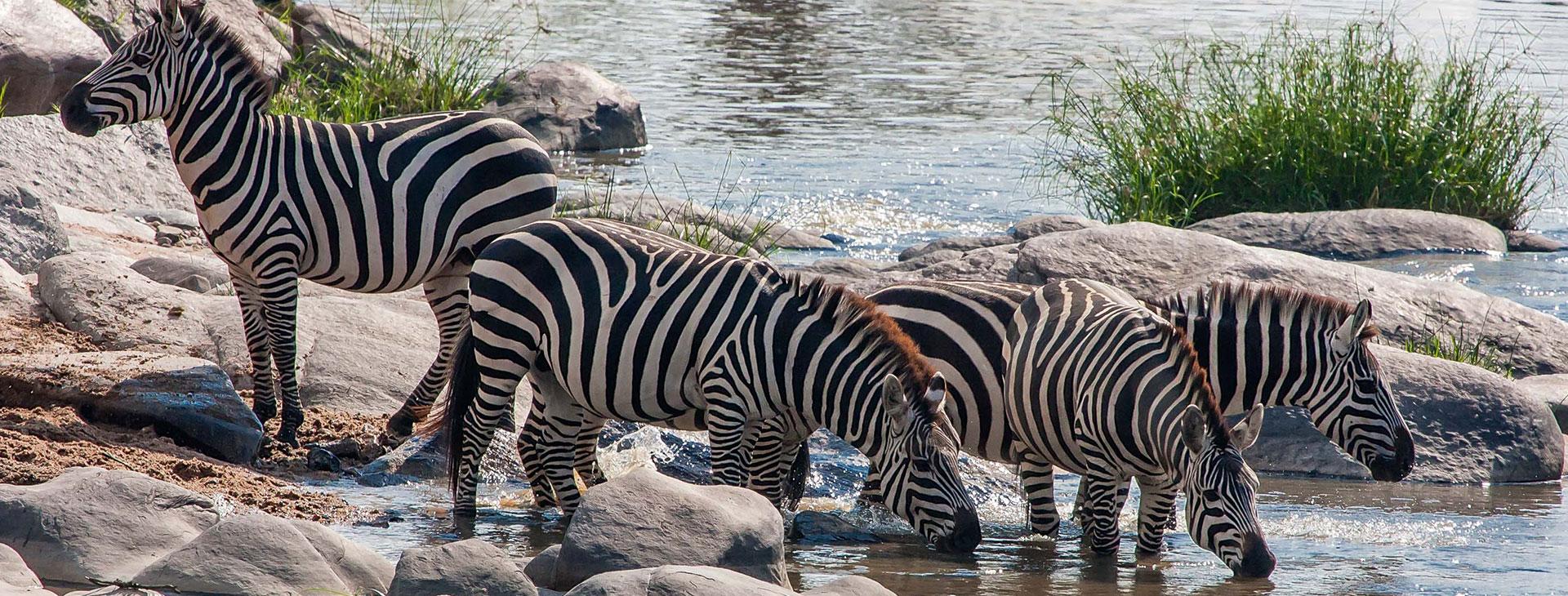 Student Safari Tours