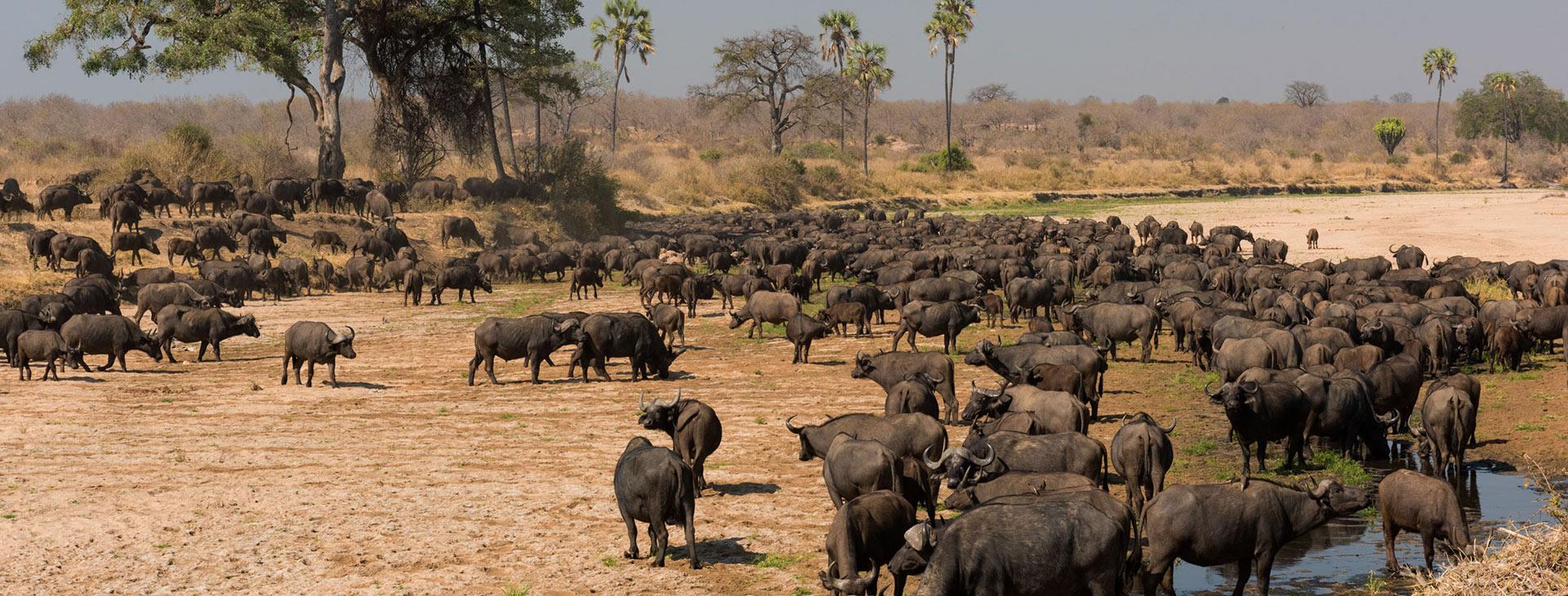 Tanzania Bush Camping Safari