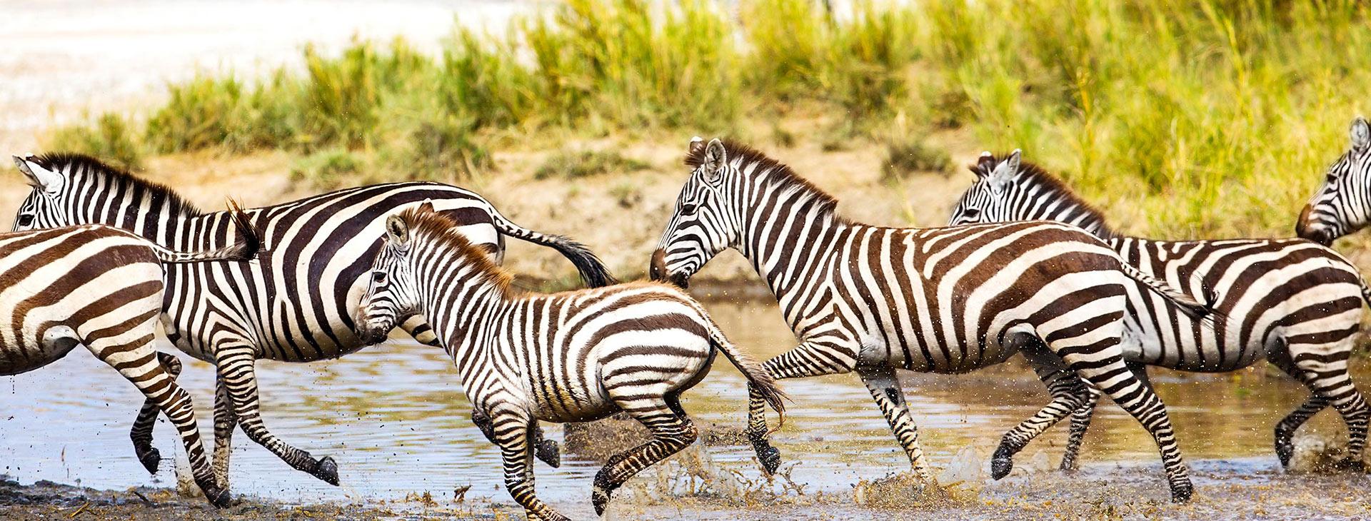 Tanzania Halal Safari