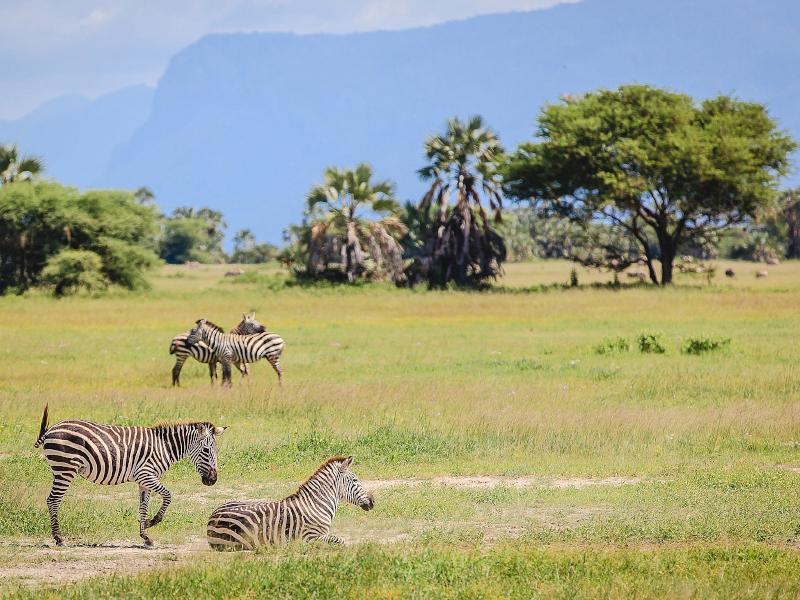 Tanzania Safari 3 Days