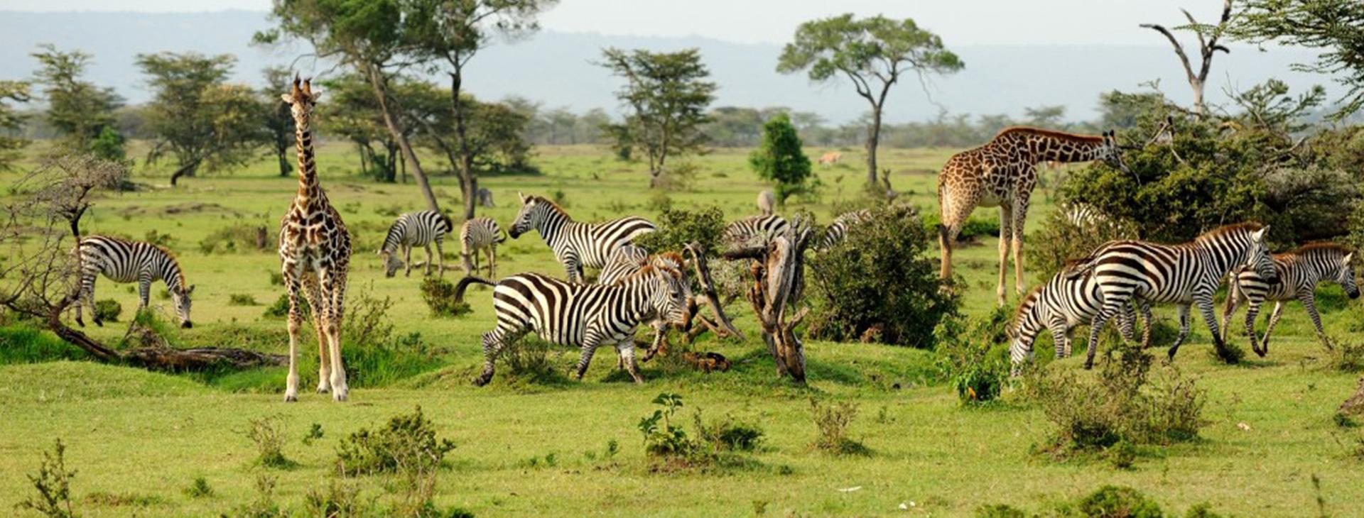 Tanzania and Kenya Halal Safari