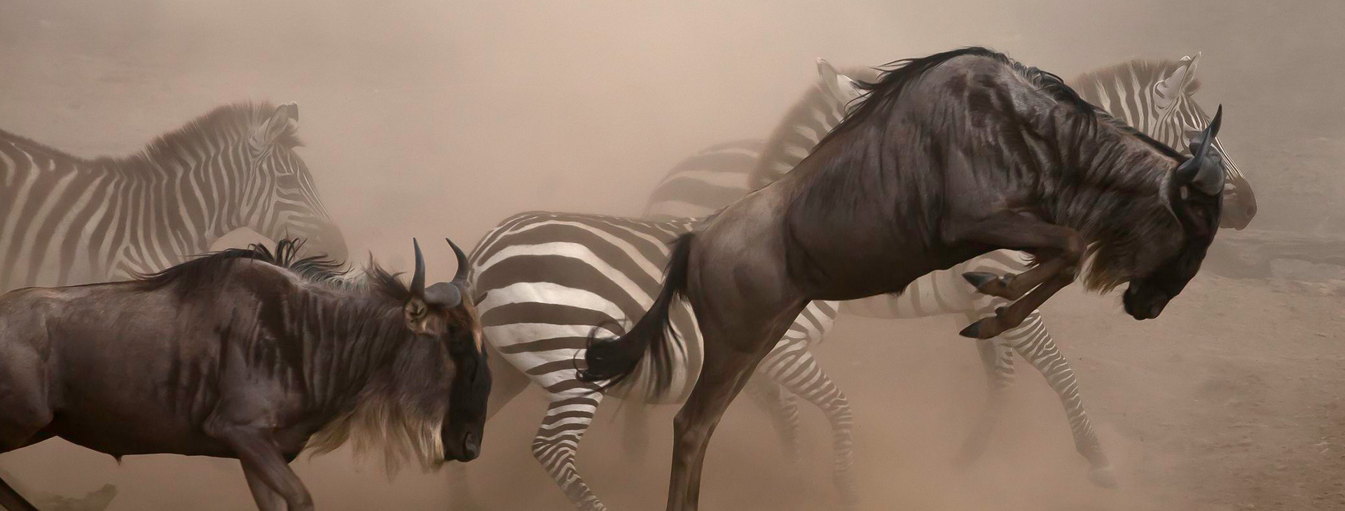 Wildebeest Migration Budget Safari
