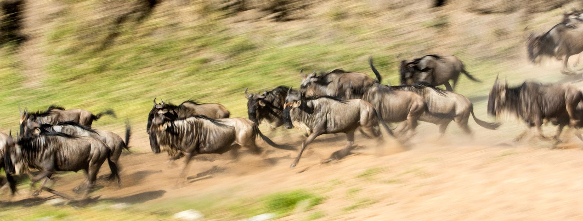 Serengeti Migration Safari in June